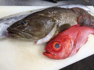 8月9日魚